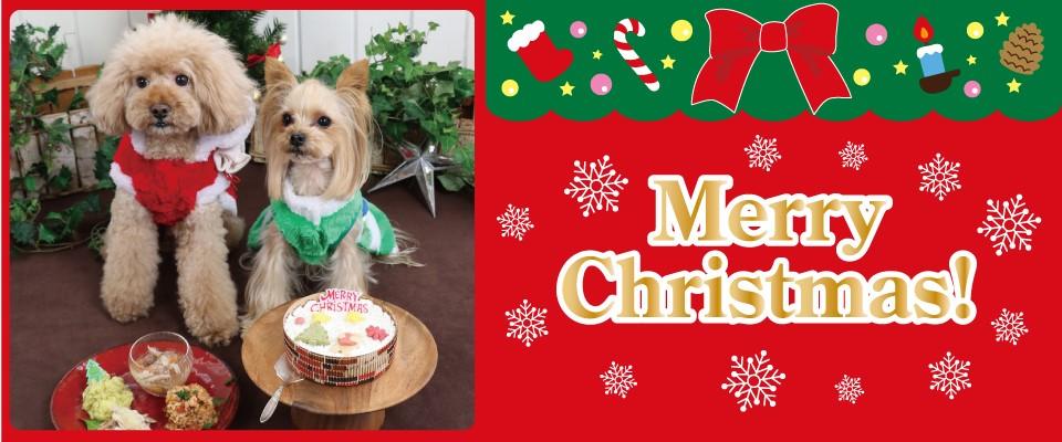 Merry Christmas!(ペット)
